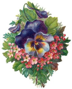 purple pansy with dainty pink flowers