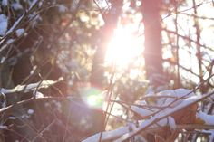 first snow forest walk Snow Forest, First Snow, Art Photography, Image, Photography, Fine Art Photography, Artistic Photography