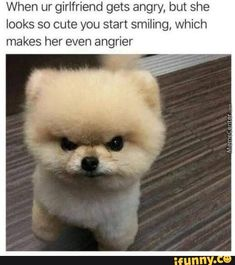 42 funny animal memes that are so cute that you will die - memebase -. - 42 funny animal memes that are so cute that you will die - memebase -… Funny Animal Memes, Animal Quotes, Funny Animals, Cute Animals, Funny Memes, Memes Humor, Funny Quotes, Pet Quotes, True Memes
