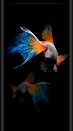 Iphone Live Wallpapers Group (35+) for Download Live ...