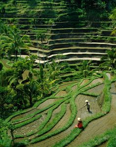 """Bali, Indonesia (Steve Vidler)"" Photography art prints and posters by Jon Arnold Images - ARTFLAKES.COM"