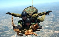 "A war-dog wonder: parachuting dogs being sent on secret missions in Afghanistan. Dropping from 10,000 feet in the air these dogs glide in"" to land ""unnoticed"" and they ""often carry cameras and are trained to attack anyone carrying a weapon. This dog and his handler are part of the Austrian special forces group."