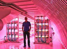 ALLPE Medio Ambiente Blog Medioambiente.org : Cómo cultivar una ensalada en el metro de Londres