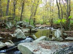 Gorman Stream Valley Park in Laurel, Maryland.