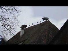Stoerche auf dem Affenberg bei Salem / Bodensee