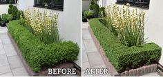 The neat lines of well trimmed box hedging contribute so much to a garden. By contrast they seem to emphasise the form of adjacent plants whilst providing a direct link to the formal lines of nearb…