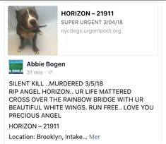 3/5/18 💔🌈 SILENT MURDER💔 HORIZON IS FOREVER GONE💔 MURDERED BY THE DEVIL IN DISGUISE AT NYCACC ‼️ I'M SO SORRY PRECIOUS TREASURE, YOU MATTERED AND WILL NEVER BE FORGOTTEN LOVE❤️💔TEARS OF GOODBYE 🌈 RIP🌈 /IJ3