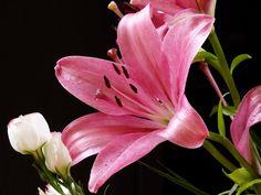 Flowers by artpak on DeviantArt