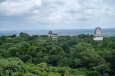 Is It even worth taking kids to Tikal Guatemala? We took our 3 kids & had a great time. We share our tips on how to make it work well. Giant Mushroom, Make It Work, How To Make, Mayan Cities, Wooden Steps, Point And Shoot Camera, Tikal, Best Sunset, Mayan Ruins