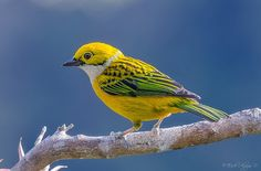 #Birds - Google+