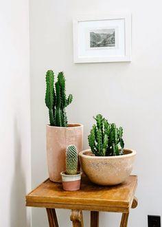 Hace cinco años ya hice este post y os enseñé algunos de los cactus que tenía ( ver aquí ). Me siguen encantando los cactus aunque ahora te...