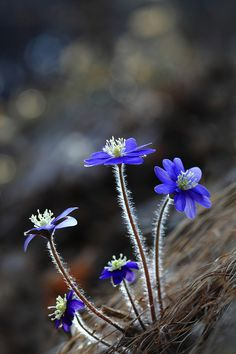 Top 10 Wonderful Flower Photos