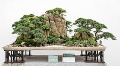 Landscaping: Penjing by unknown chinese Artist This stunning relativly new Form of Bonsai-Art creates covincing, realistic Layouts. Must have!