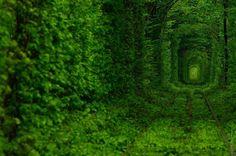 Тоннель любви в Клевани.