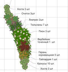 схема клумбы непрерывного цветения из многолетников: 17 тыс изображений найдено в Яндекс.Картинках