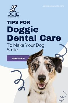 If your dog is experiencing bad breath, lopsiding chewing, pain when eating, or mouth and cheek pawing -- then take a look at our tips for great doggie dental care.