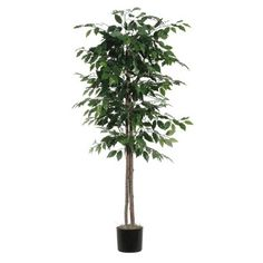 This could look good in the corner of the living room to take up that empty space.  Target: http://www.target.com/p/artificial-ficus-tree-green-6/-/A-15667582#prodSlot=_8_15