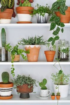 Those teeny Terra cotta pots on the bottom shelf