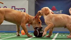 Watch the 2014 'GMA' Puppy Bowl!