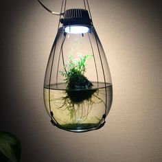 floating garden with lighsource Water Terrarium, Terrarium Plants, Indoor Water Garden, Indoor Plants, Hydroponic Gardening, Organic Gardening, Another Green World, Aquarium Led, Mini Aquarium