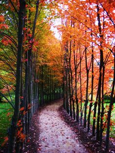path in the autumn park, bright colors - beautiful images and wallpapers Beautiful World, Beautiful Places, Simply Beautiful, Foto Nature, Fall Weather, Belleza Natural, Belle Photo, Pretty Pictures, The Great Outdoors