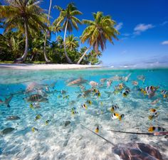French Polynesia truly is a paradise. This little gem is tucked away in the South Pacific Sea. Beautiful water, but no snorkeling for me with those sharks in the picture.