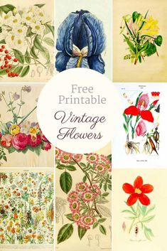 These free vintage botanical prints would be great for decorating your home for fall. They look lovely in a gallery or can simple be used for decoupage. Vintage Flower Prints, Vintage Botanical Prints, Vintage Flowers, Botanical Art, Vintage Abbildungen, Vintage Images, Decoupage Vintage, Wedding Vintage, Vintage Floral