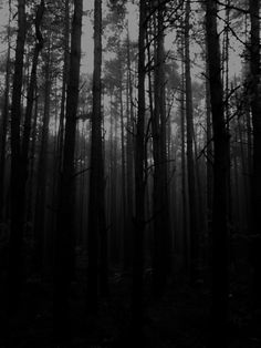 Dark forest glow of the lake an eternal dance of death Dark Forest, Magical Forest, Haunted Forest, Dance Of Death, Night Forest, Creepy Horror, Forest Photography, Dark Wood, Wallpaper