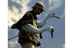 Jesse Conklin carries inflatable cranes – decoys for catching godwits. Scientists hoped the godwits would dive-bomb the cranes (known nest predators in Alaska). Predator, Scientists, New Zealand, Alaska, Nest, Science, King, Adventure, Animals