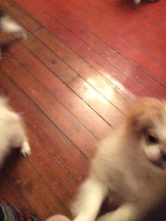 Kazumi :) Aiko, Puppies, Dogs, Animals, Animales, Puppys, Animaux, Pet Dogs, Doggies