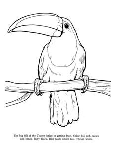 Wild Animal Coloring Pages  Animal Identification drawings