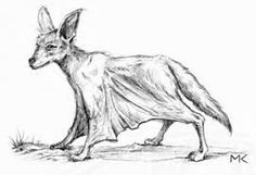 Mlularuka- Tanzanian cryptid: it is a supposed dog-like flying jackal, reported from Tanzania. Bat-like wings. Active at dusk. Flies or glides. Utters loud cries while flying. Raids mango and pomegranate orchards.