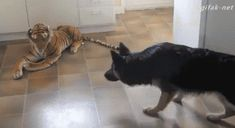 Such a brave doggy - www.viralpx.com