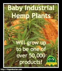 Baby Industrial Hemp Plants will grow up to be one of over 50,000 products!