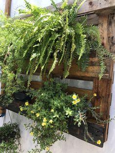 Container Plants, Landscape Design, Gardening, Wall, Flowers, Rooftop Gardens, Wall Trellis, Verandas, Landscaping