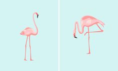 Nothing says summer like a couple of pink flamingos.