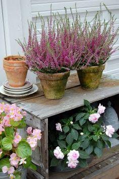 Simple things - heaters in a clay pots./Proste rzeczy - wrzosy w glinianych doniczkach.