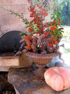 Fall scenes at the Healdsburg, CA cooking school.