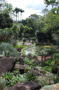The Gardends of Roberto Burle Marx, Just outside RIo, are inspirin gand gorgeous. Sítio Roberto Burle Marx