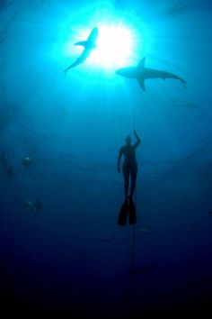 LOVE FISH, LOVE THE SEA    We love the work of #champion freediver Hanli Prinsloo and I AM #WATER, a trust that deepens man's appreciation and care for our #oceans. Photo from their webby's gallery