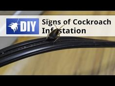 Cockroaches are persistent pests. They can be hard to find and eliminate. In this video we show you how to identify whether or not you have a roach problem. For a guide on how to eliminate cockroaches yourself, click here: https://www.pinterest.com/pin/237635317814263067/ For more information on identifying roaches, click here: http://www.domyownpestcontrol.com/roach-identification-guide-a-456.html
