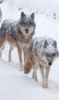 Magnifique couple sous la neige <3 ***