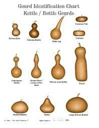 Resultado de imagem para gourd