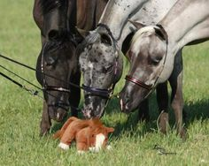 Horses checking out a stuffed animal