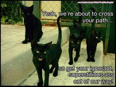 Yeah!! What they said! Old Cats, Cats And Kittens, All Black Cat, Black Cats, Crazy Cat Lady, Crazy Cats, Cute Cats, Funny Cats, Black Cat Humor