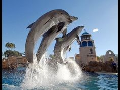 Video of the day: Just enjoy the show: Sea World, Dolphin Discovery in HD http://www.thehansindia.com/posts/index/2014-04-18/Video-of-the-day-Just-enjoy-the-show-92429