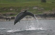 Whale and Dolphin Volunteer Conservation, Hebrides