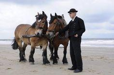 strand knol - Google zoeken