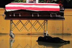Labrador retriever Hawkeye lays by the casket during the funeral of his owner, Navy SEAL Jon Tumilson, 35, in 2011 in Rockford, Iowa. Tumilson was one of 38 killed on August 6 when a rocket-propelled grenade took out a U.S. Chinook helicopter in Afghanistan.