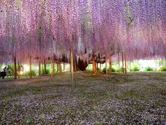 Somewhere in Japan. It looks like something from Avatar.